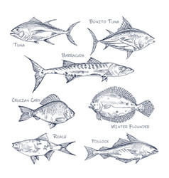 set isolated fish sketch for shop or storemenu vector image