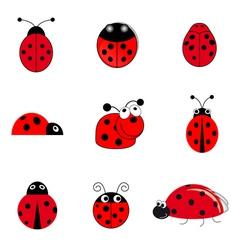 Set ladybugs vector