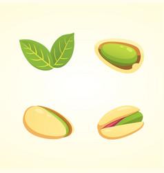set pistachio nut in cartoon vector image