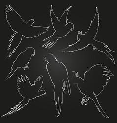 white parrots jungle birds line vector image