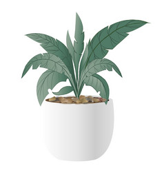 Cast-iron plant with pot vector
