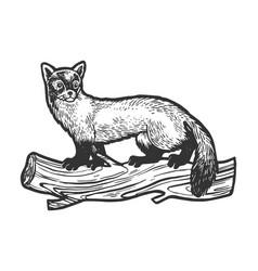 Marten animal sketch engraving vector