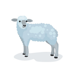 flat icon of cute gray lamb small domestic vector image