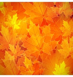 Floral autumn fall background with maple leaves vector