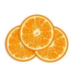 Fresh oranges isolated on white background vector