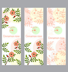 Herbal tea collection cinnamon rose banner set vector