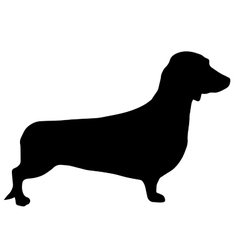 High quality silhouette of Dachshund or basset vector