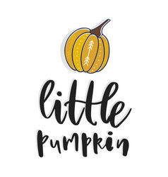 little pumpkin hand drawn vector image