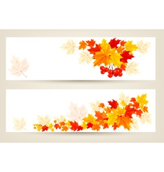 two autumn banners with color leaves vector image