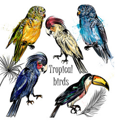 collection of tropical birds hand drawn vector image