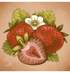 Engraving strawberry retro vector