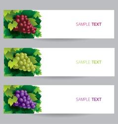 Grape Vine Banner vector image