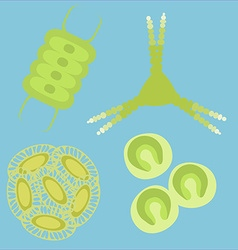 Phytoplankton small organisms vector