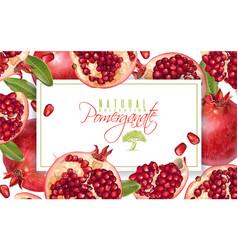 Pomegranate horizontal banner vector