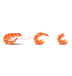 shrimp seafood set prawn with head and vector image