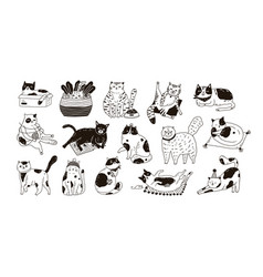 collection cute funny cats sitting washing vector image