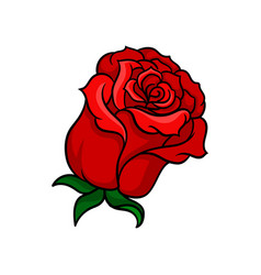 icon of bloody-red rose bud of beautiful vector image