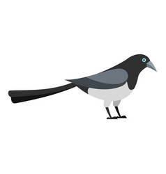 Standing magpie icon flat style vector