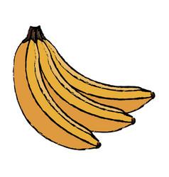 banana fruit fresh harvest nutrition food vector image