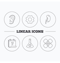 Lab bulb medical plaster and ear icons vector image