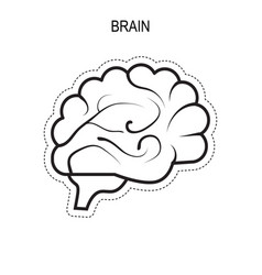 brain human organ vector image