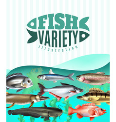 fish variety vector image