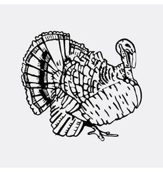 Hand-drawn pencil graphics turkey Engraving vector image