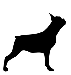 High quality silhouette of french bulldog isolated vector