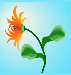 Orange flower gerbera on blue sky background vector