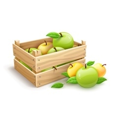 Apple fruits garden harvest vector image
