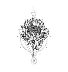 Black and white protea vector