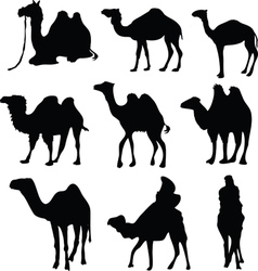Camel silhouettes vector