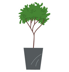decorative topiary tree in pot isolated at white vector image