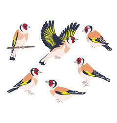 Goldfinch birds flying and sitting set vector