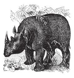Rhinoceros vintage engraving vector image