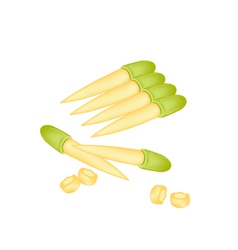 Stack of fresh baby corns on white background vector