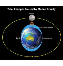 Tidal Changes vector