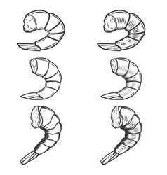set of shrimp tails isolated on white background vector image vector image