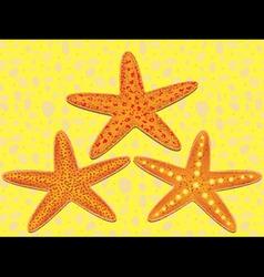 starfish on beach vector image vector image