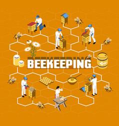 beekeeping isometric flowchart vector image