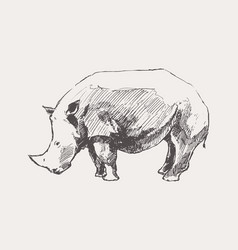 rhinoceros hand drawn a sketch vector image