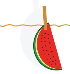 Watermelon hanging on a rope vector