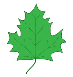 maple leaf green sign 107 vector image vector image