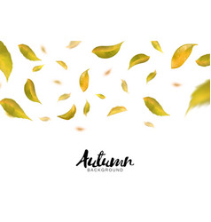 falling autumn leaves on white background vector image