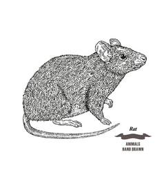 Hand drawn mouse or rat animal black ink sketch vector