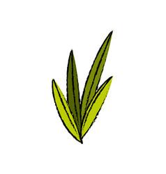 leaves plant nature foliage botanical image vector image