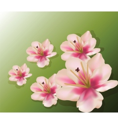 Lily flowers composition vector image