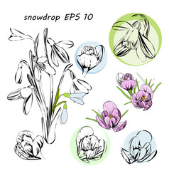 stylized first spring flowers vector image