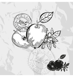 Hand drawn decorative apples vector