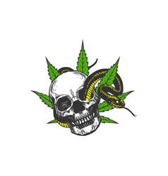 hand drawn skull cannabis leaf and snake logo desi vector image